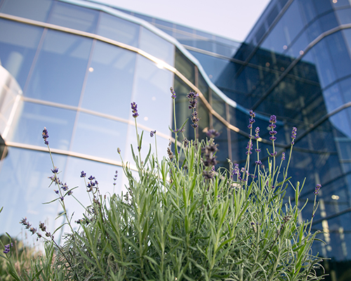 North American Division headquarters building with lavender