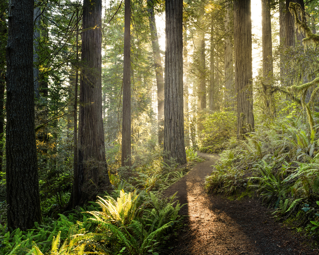 stock photo of California forest
